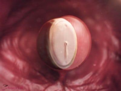 مراحل الحمل بالصور خلال الشهر الاول من الحمل