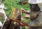 تربية النحل 2