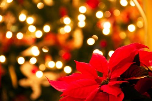 كروت معايدة عيد الميلاد المجيد