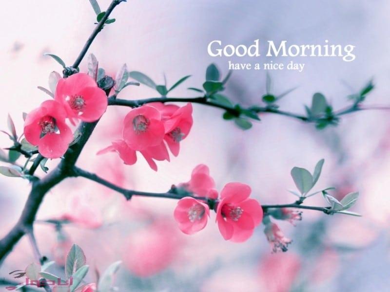 صباح الخير انا حواء