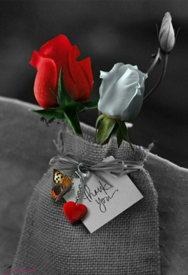 صور ورد جميلة ونصائح لزراعة الورود بالمنزل مجلة انا حواء